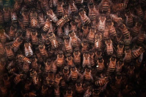 Бесплатное стоковое фото с насекомое, Пчела, текстура