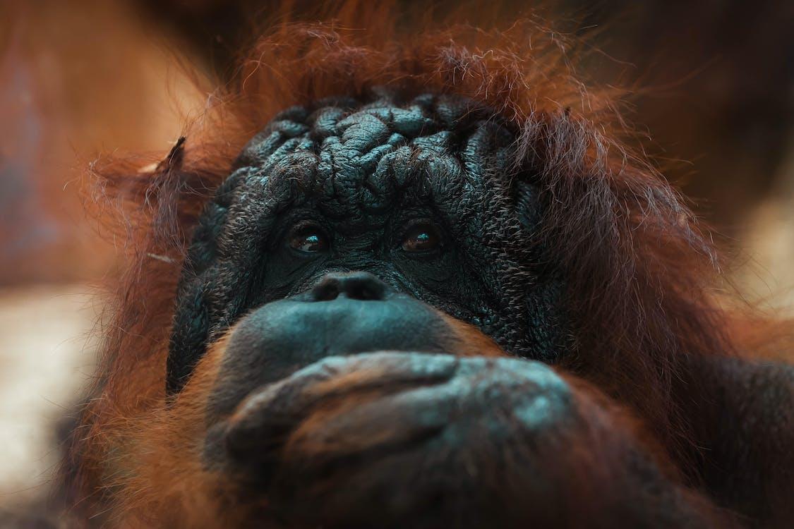 Close-Up Photo of Monkey