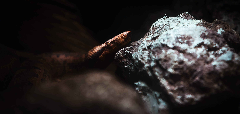Free stock photo of animal, dark, portrait, snake