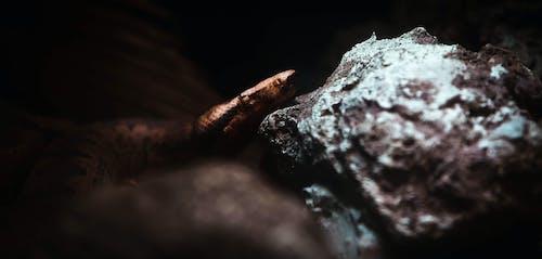 Бесплатное стоковое фото с животное, змея, портрет, темный