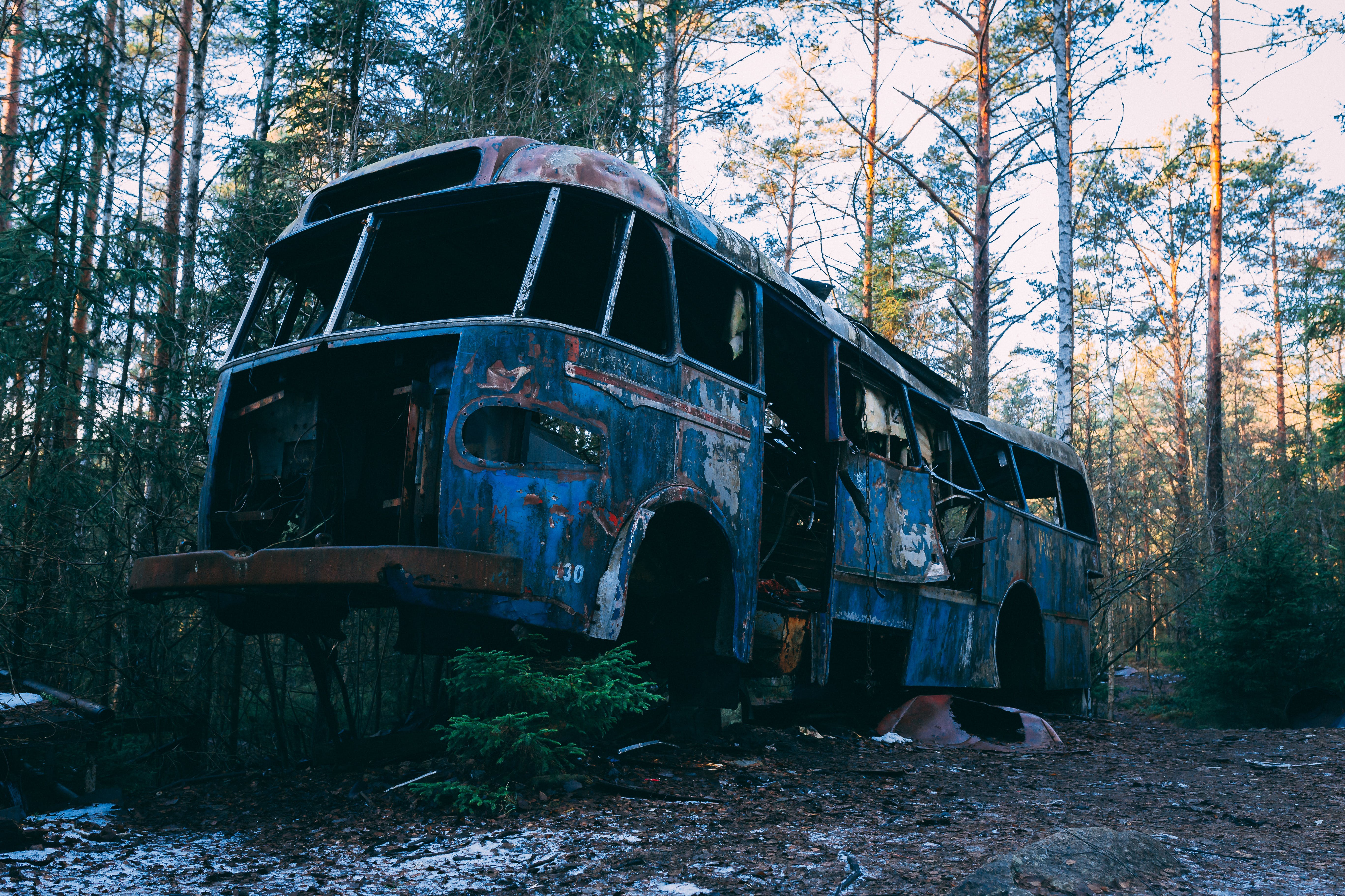 Wrecked Blue Bus In The Woods