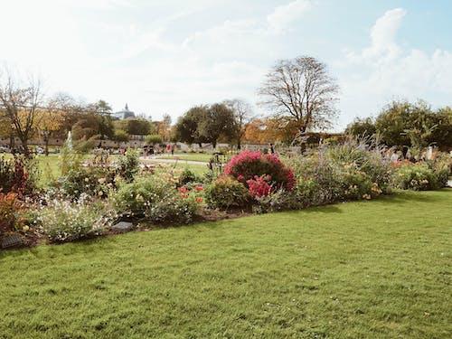 Ilmainen kuvapankkikuva tunnisteilla kasvit, kesä, kukat, kukinta