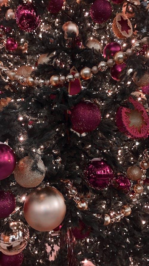 冷杉, 新年, 聖誕 的 免费素材照片