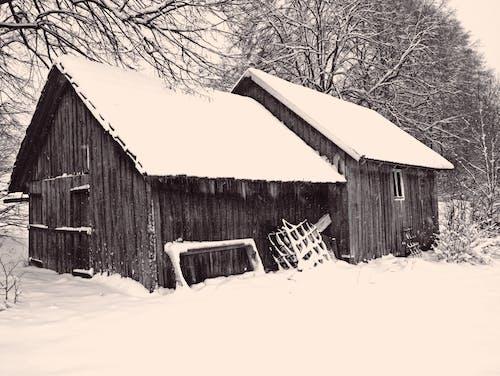 겨울, 경치, 눈, 침묵의 무료 스톡 사진