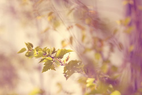 Gratis lagerfoto af blade, makro, plante
