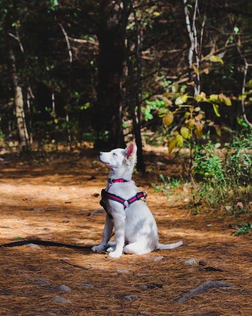 Photo of Dog Sitting On Ground