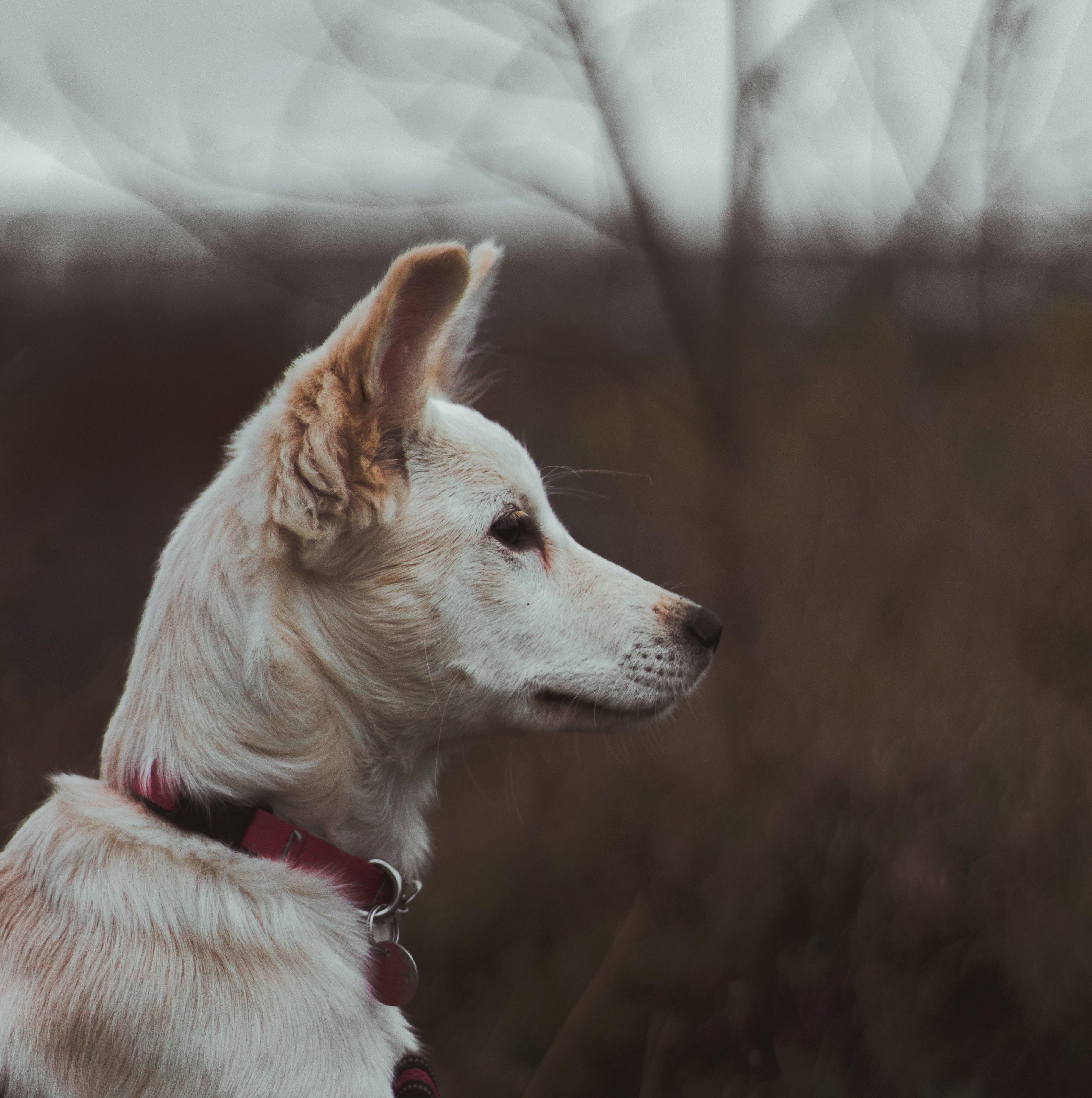 Close-up Photo of White Dog