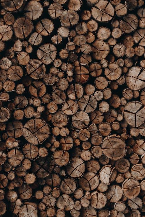 Immagine gratuita di albero, catasta di legna, legna da ardere