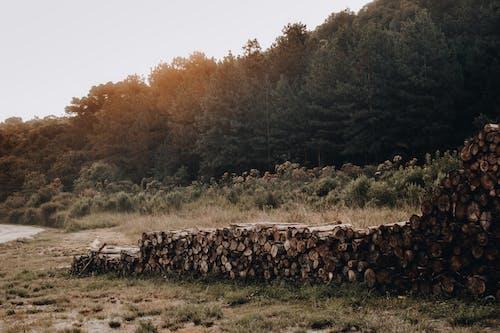 Gratis lagerfoto af dagslys, græs, hakket træ, miljø