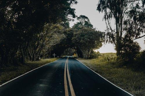 4k 桌面, 天性, 小路, 柏油路面 的 免费素材照片