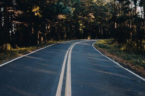 4k duvar kağıdı, ağaçlar, asfalt, asfalt yok içeren Ücretsiz stok fotoğraf