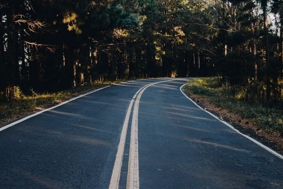 alberi, ambiente, asfalto