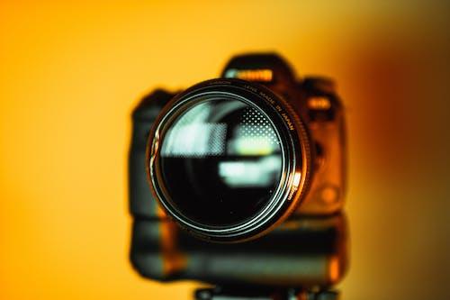 Gratis arkivbilde med digitalt speilreflekskamera, dybdeskarphet, fokus, fotografi