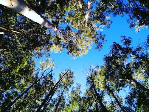Gratis stockfoto met blauwe lucht, bossen, feom onderaan, geen wolken