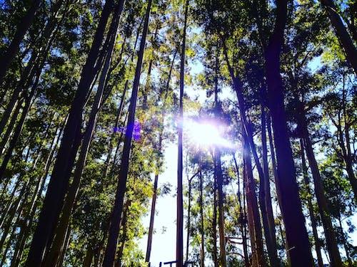 Gratis stockfoto met bomen, boom, bossen, Goedemorgen