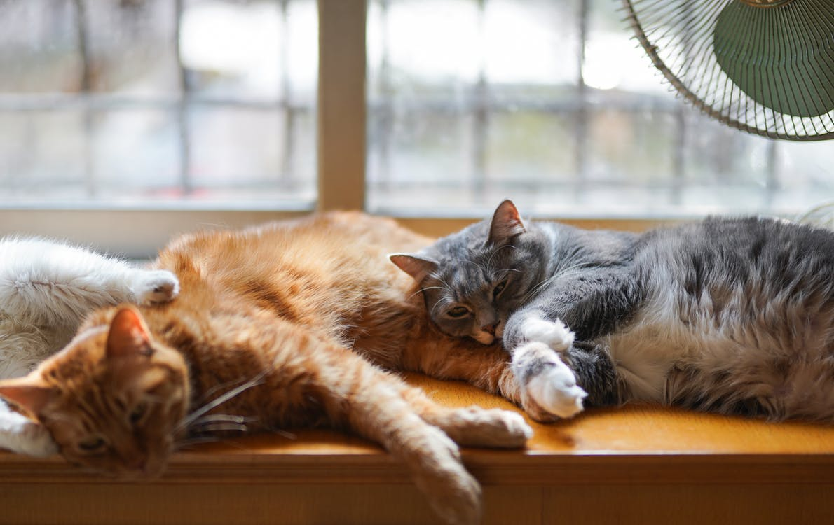 домашний, животное, котенок