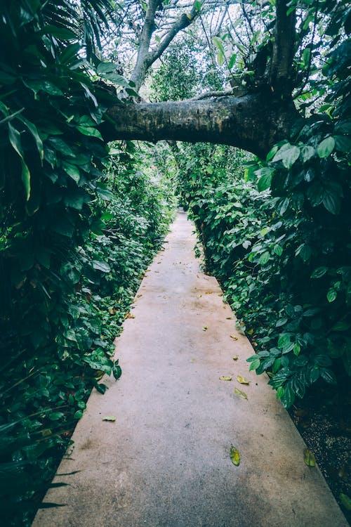 Δωρεάν στοκ φωτογραφιών με ανάπτυξη, γραφικός, δάσος, δέντρα