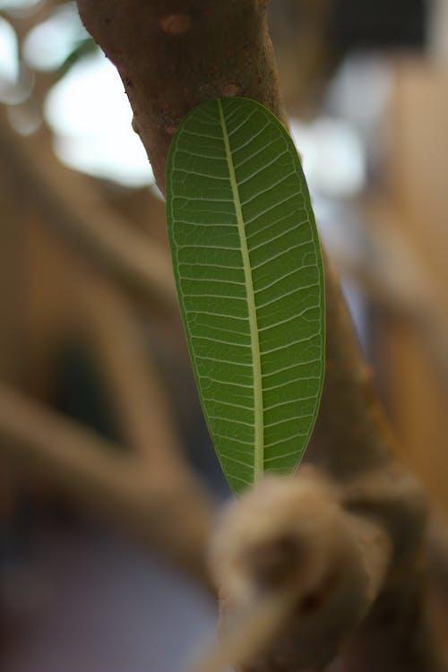 คลังภาพถ่ายฟรี ของ การถ่ายภาพ, ต้นไม้, ธรรมชาติ, ป่า