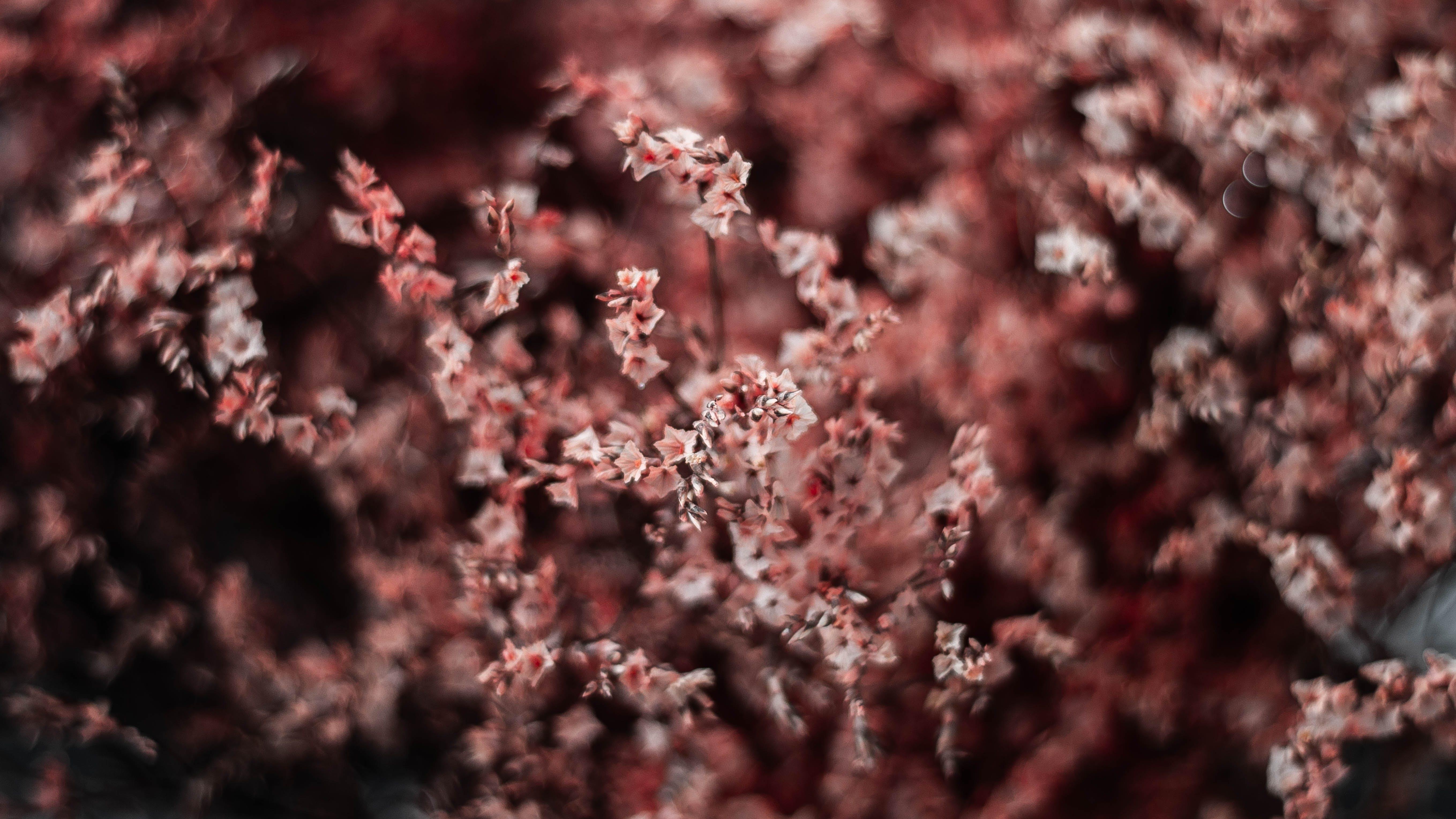 Free stock photo of dalat, dry, flower, red flower