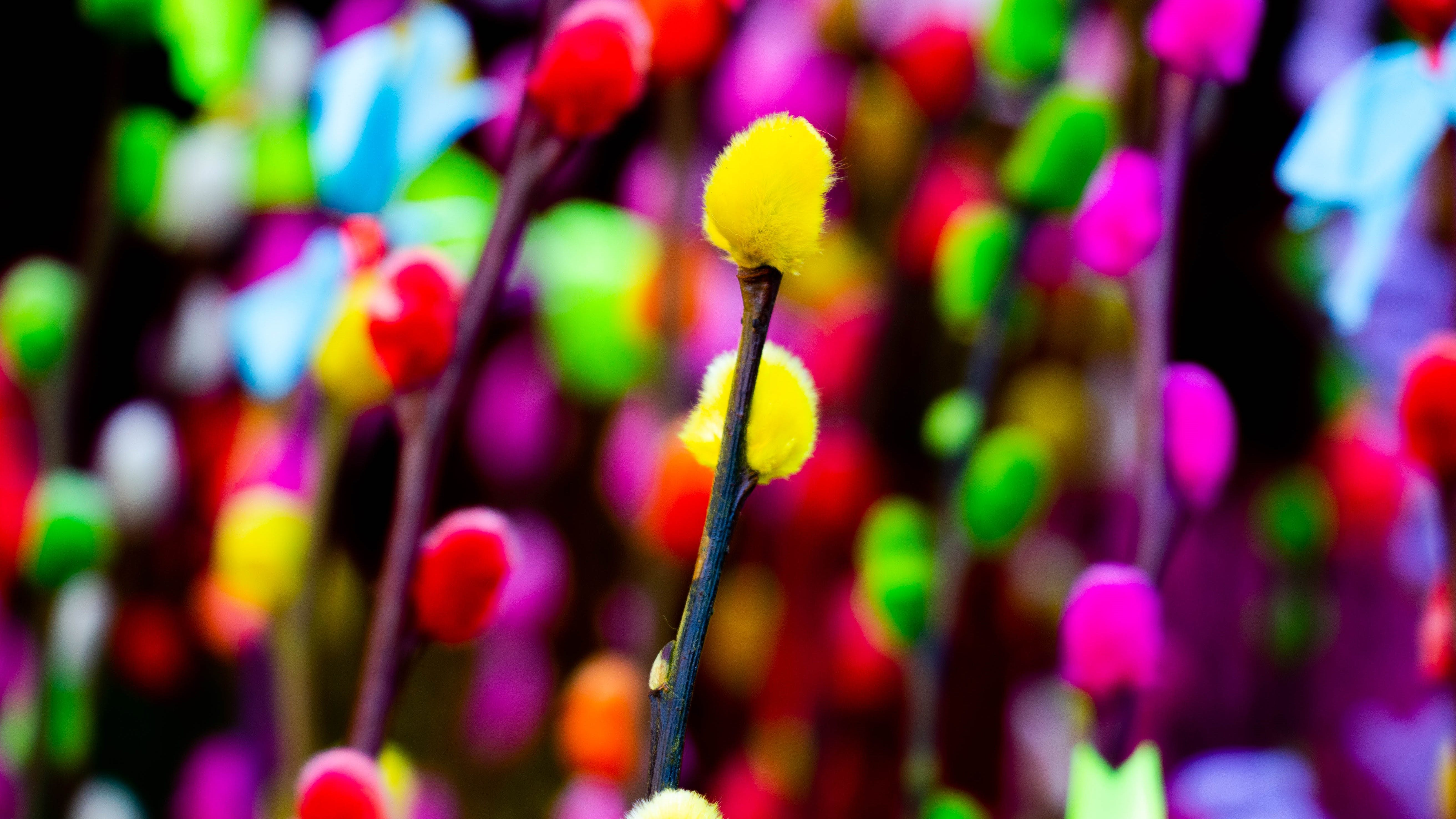Free stock photo of artificial flowers, color, colorful, dalat