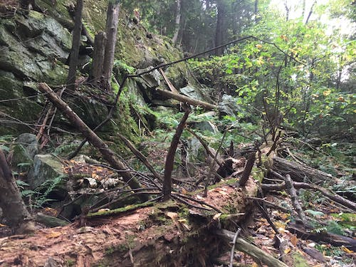 Free stock photo of adirondack, dead tree, forest