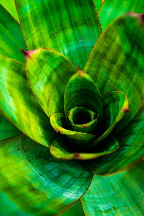 Free stock photo of bromeliad