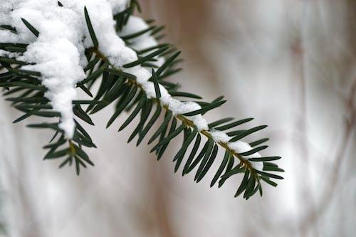 Gratis lagerfoto af close-up, makro, sne, snedækket