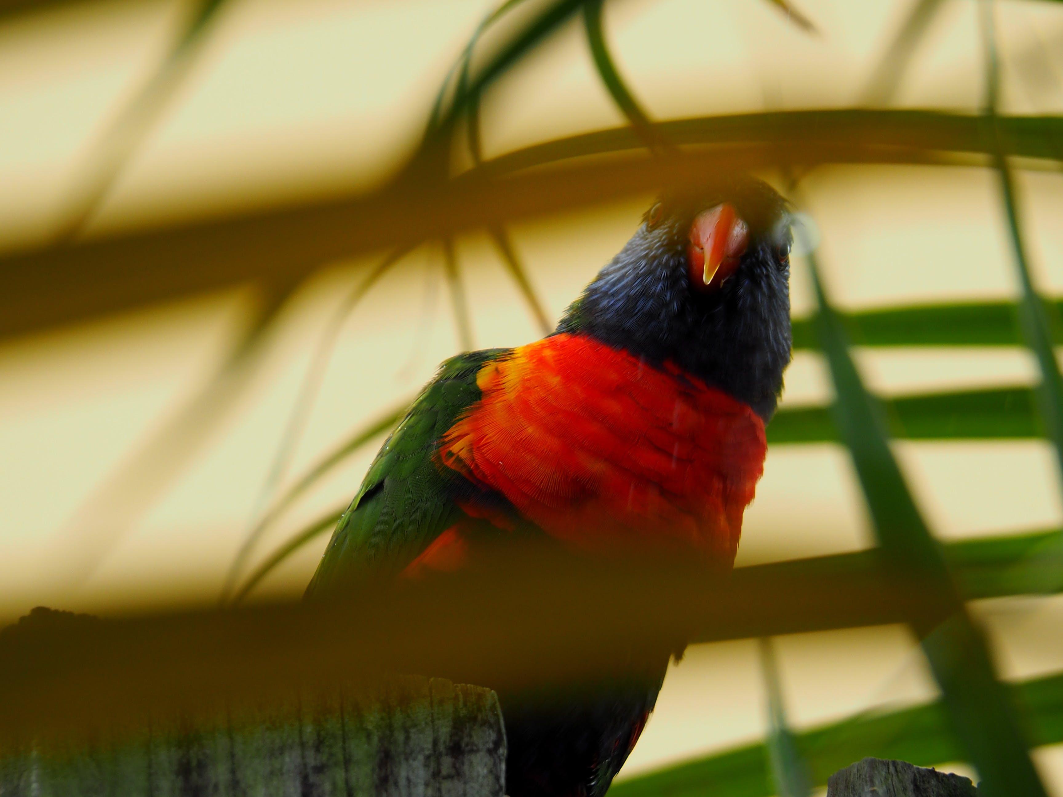 Bird Behind Leaves