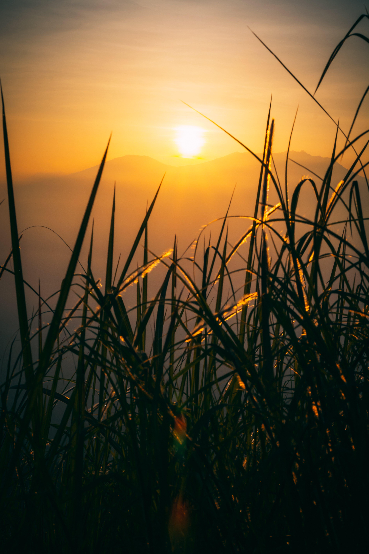 Free stock photo of gold sun, morning, mountain, sunrise