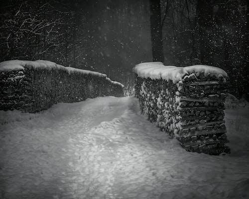 Gratis lagerfoto af forkølelse, skov, sne, sneklædt