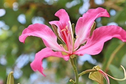 Kostnadsfri bild av grön, vacker blomma
