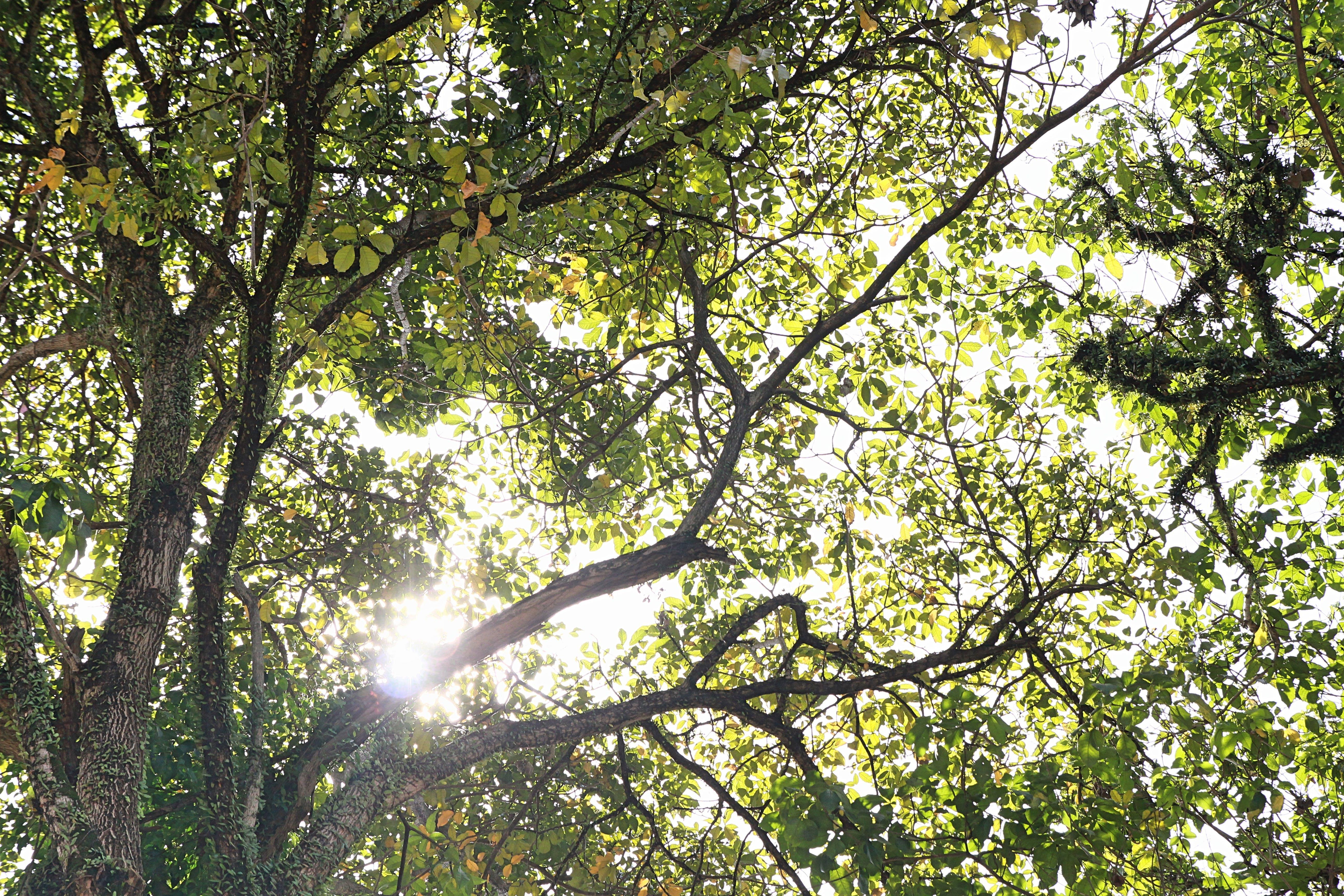 Free stock photo of green, morning sun, nature, trees