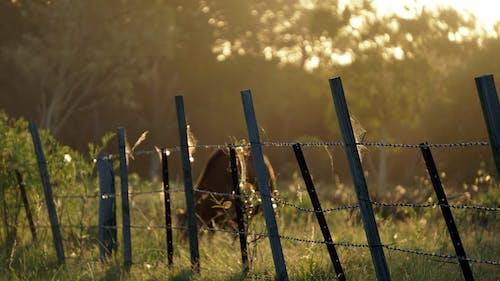 Ingyenes stockfotó aranyóra, délután, farm, kerítés témában