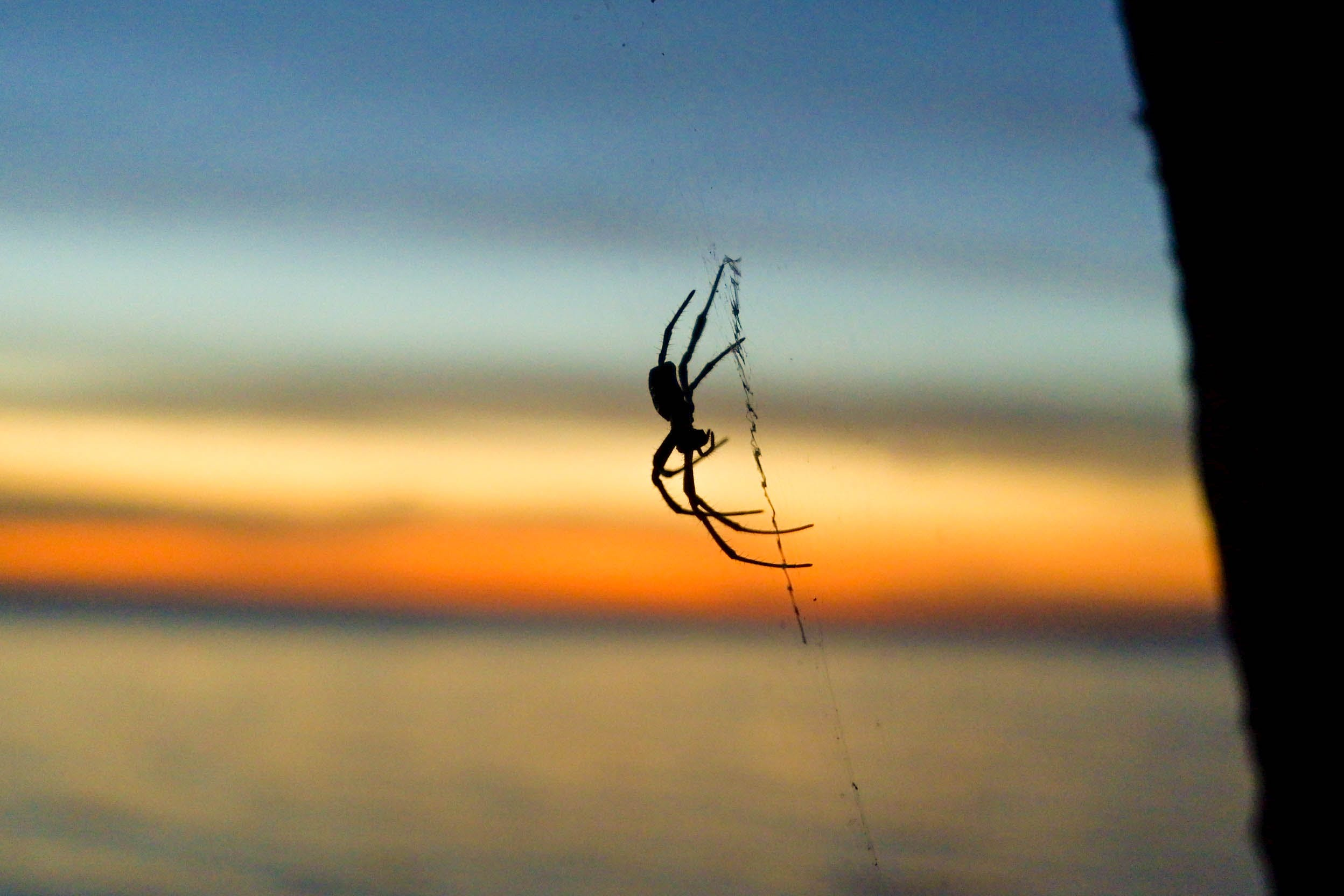 Free stock photo of golden sunset, shadow, spider, spider web