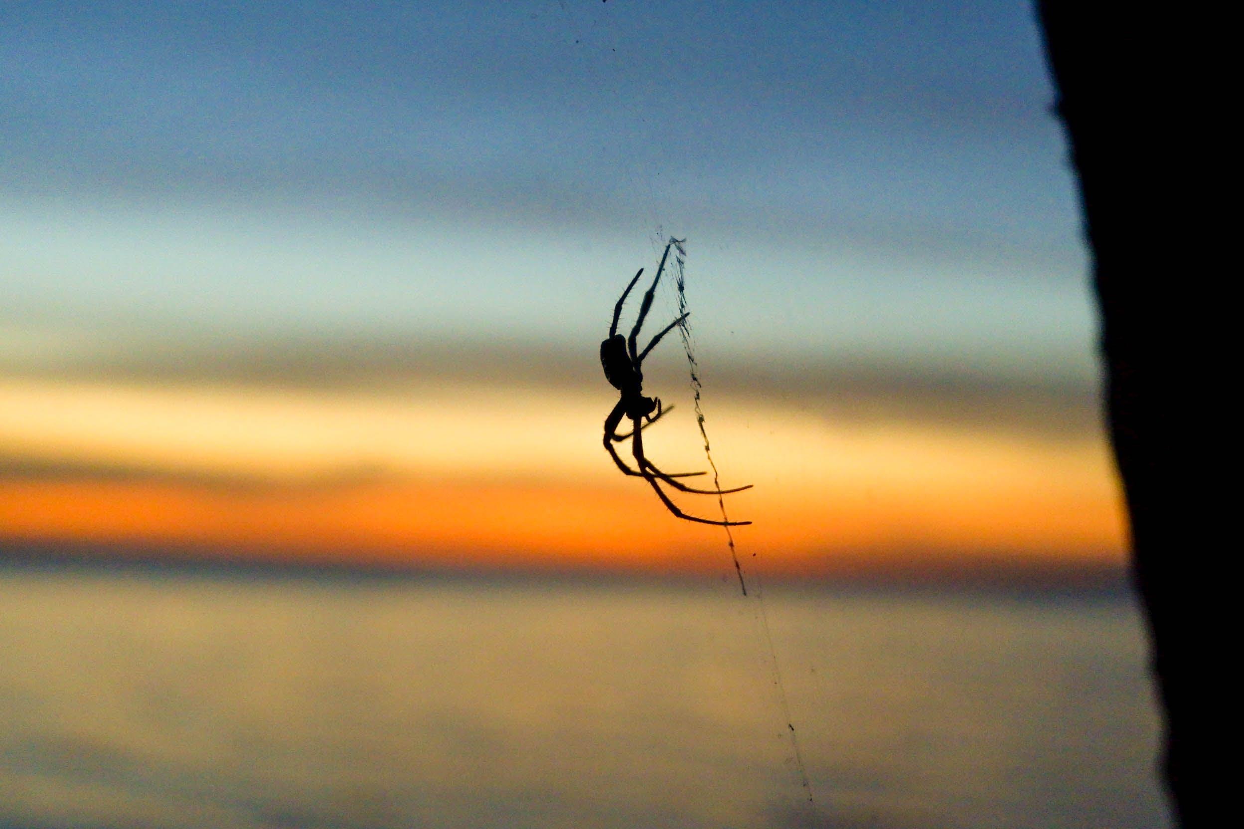 shadow, spider, spider web