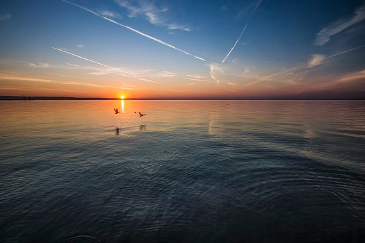 2 Birds Flying Near Body of Water during Orange Sunset