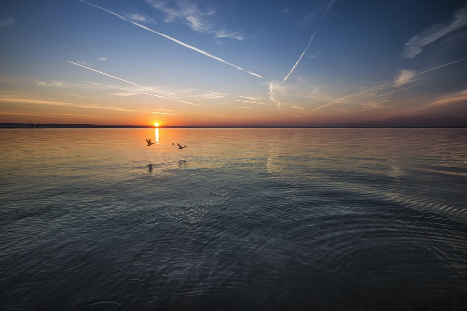 2 Birds Flying Near Body of Water during Orange Sunset