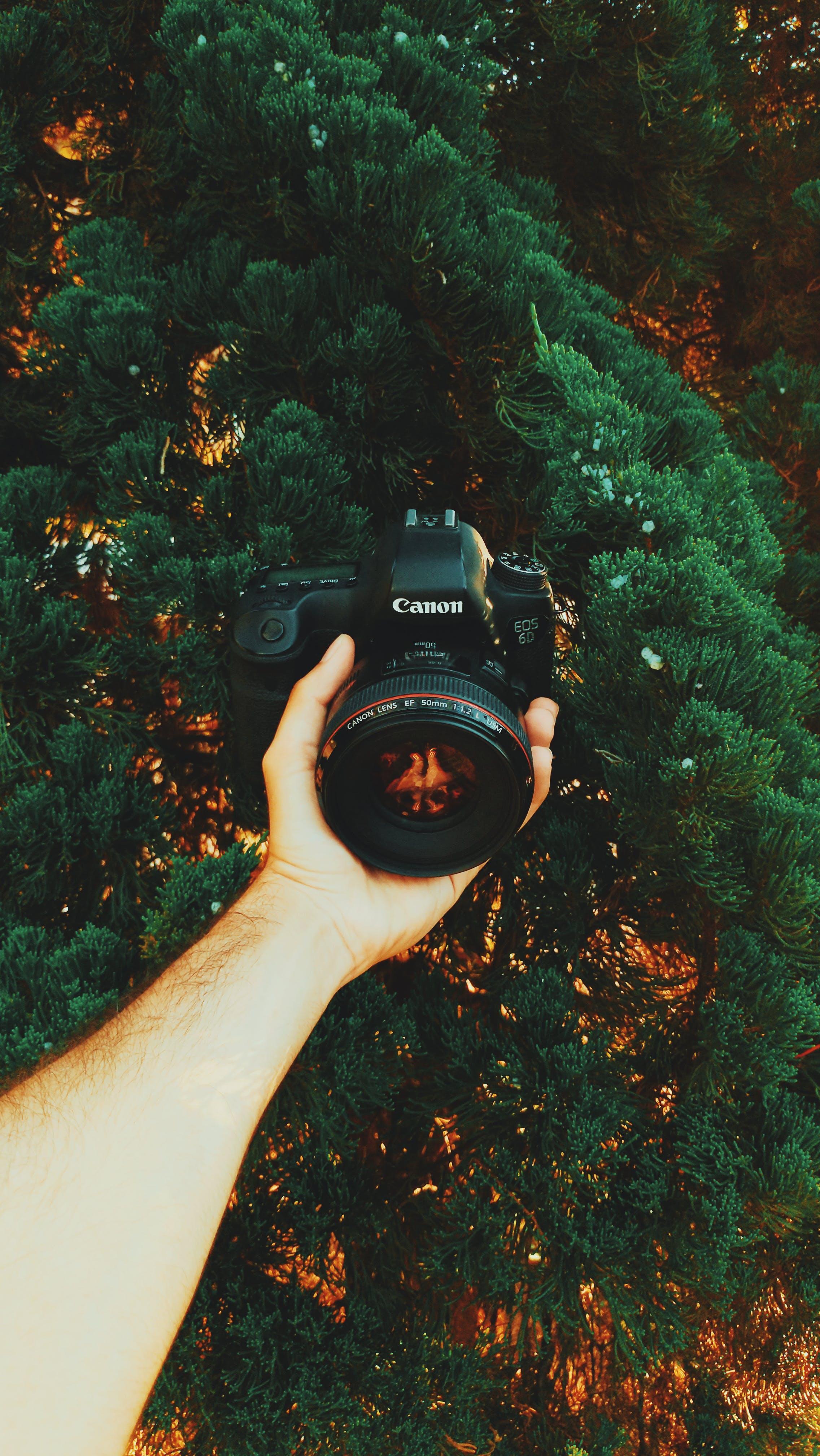 câmera, câmera dslr, câmera profissional