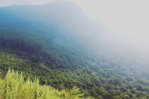 Free stock photo of blue mountains, cloud, fog, forest