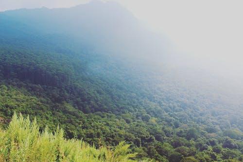 Gratis stockfoto met berg, blauwe bergen, Bos