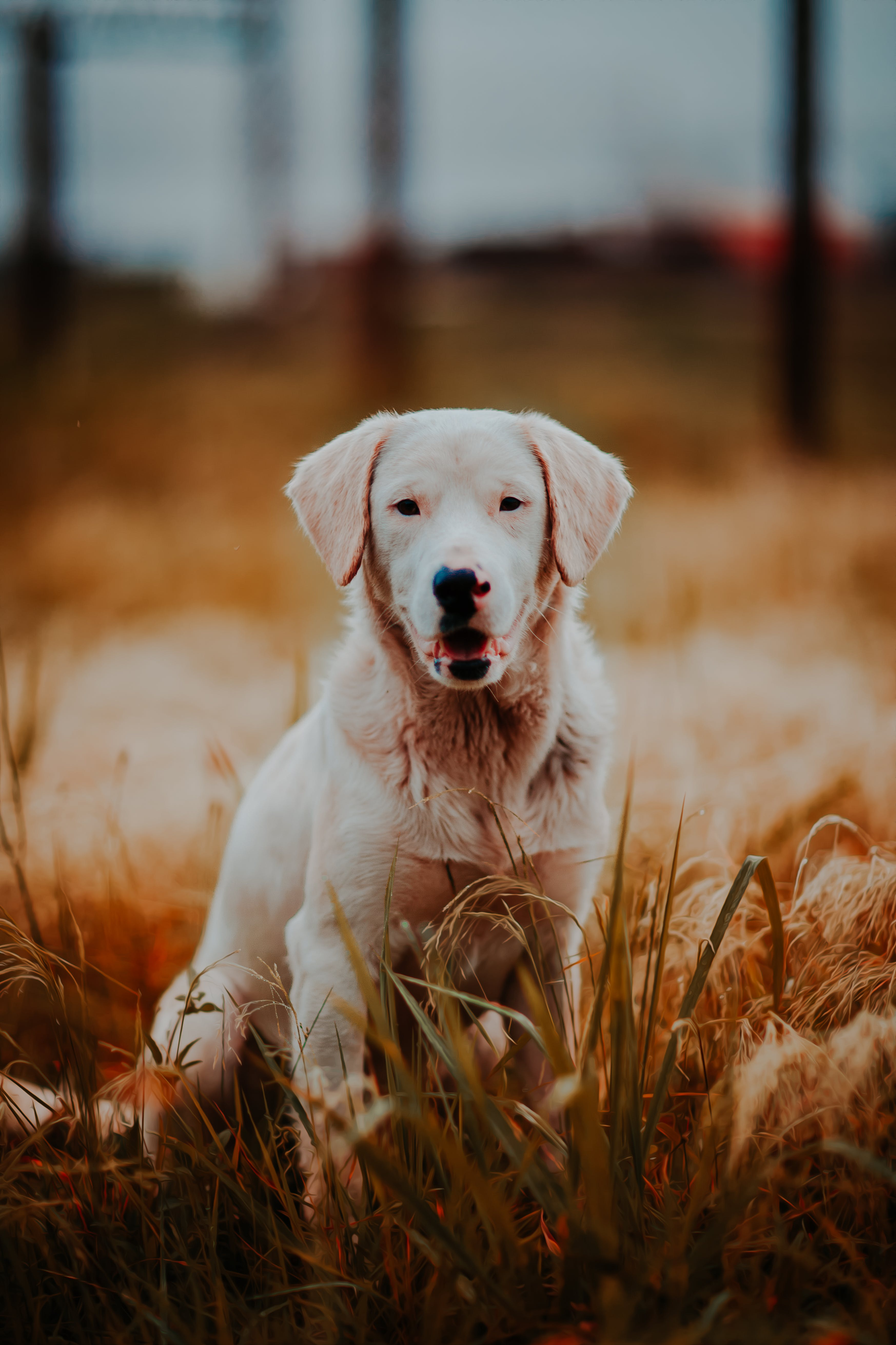 Photo of Dog in Grass Field