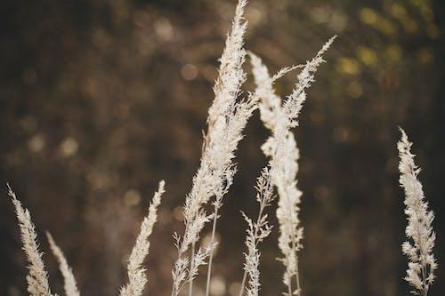 フィールド, 太陽フレア, 褐色の無料の写真素材