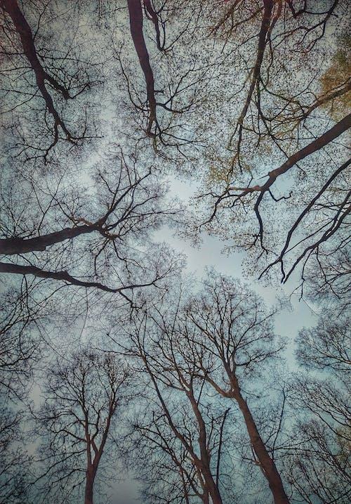 枝, 森林, 青空の無料の写真素材