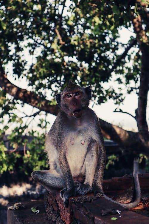 Gratis stockfoto met aap, achtergelaten, Adobe Photoshop, artistiek