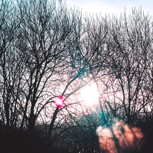 Foto profissional grátis de árvore, brilhante, com frio, cor