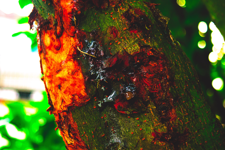 Free stock photo of bark, cold, dew, macro