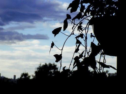 Free stock photo of houseplant, landscape, nature