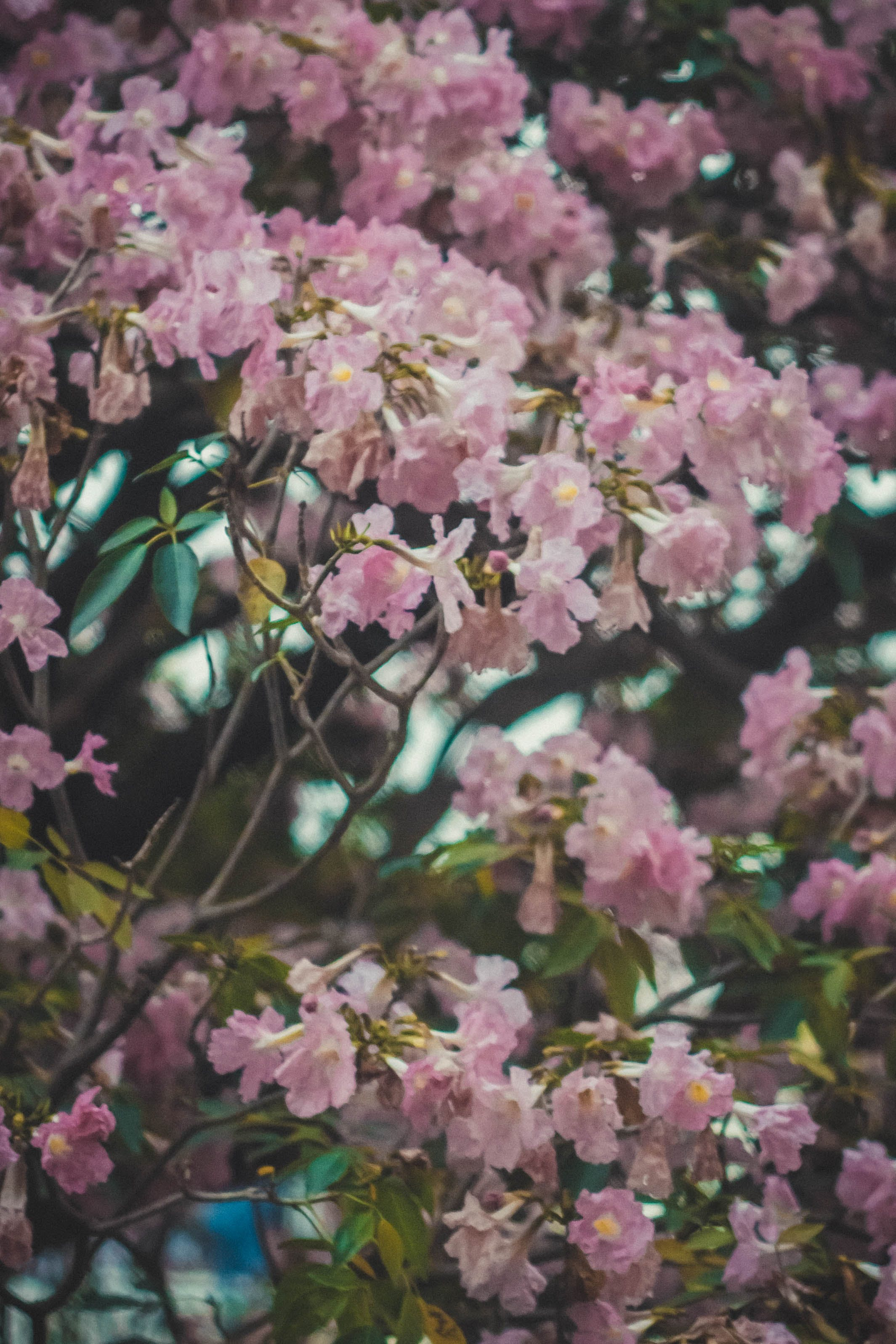 Free stock photo of #flowers, #nature, #pretty, #sky