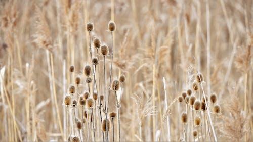 Foto d'estoc gratuïta de bonic, bushcraft, d'herbes, flor bonica