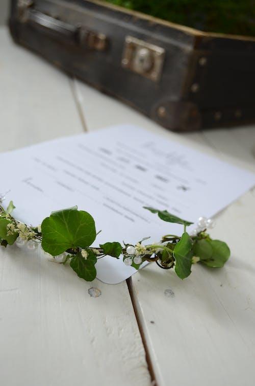 Základová fotografie zdarma na téma kytka, svatba